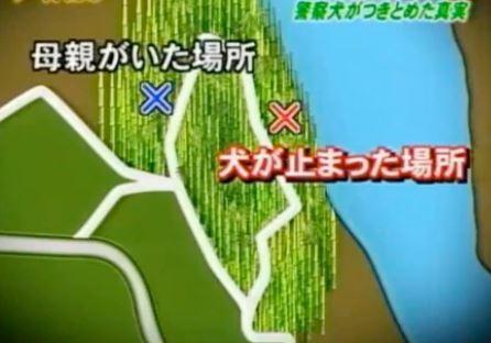 五色台ビジターセンター付近の竹林の画像