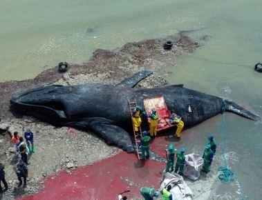 ザトウクジラの画像